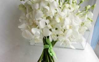 Свадебный букет из орхидей: выбираем идеальный букет невесты