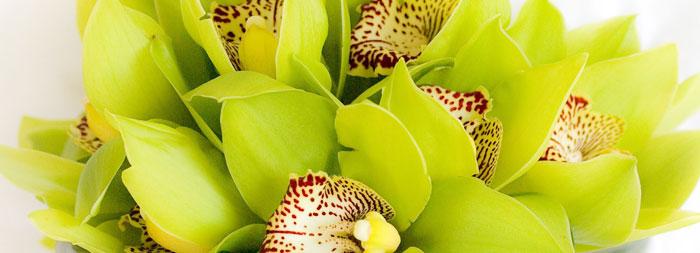 Орхидеи для невесты