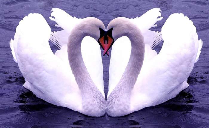 Аметист – символ любви