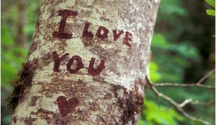Обряд годовщины свадьбы: надпись на коре дерева
