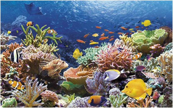 Мальдивские коралловые рифы для свадебной поездки