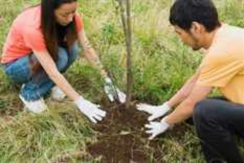 Young people planting tree